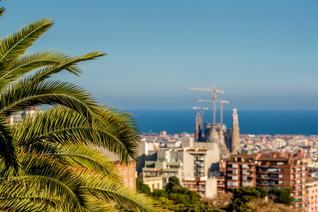 Barcelona cityscape overlook from Park Guell. Focus on palm tree.