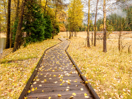 Fallen yellow autumn leaves on the boardwalk. Meadow in Yosemite National Park Valley at cloudy autumn morning. Low clouds lay in the valley. California, USA. Stock Photo