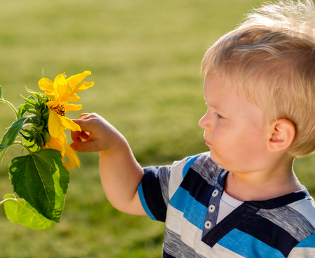 Portrait of toddler child outdoors. Rural scene with one year old baby boy looking at sunflower Stock Photo
