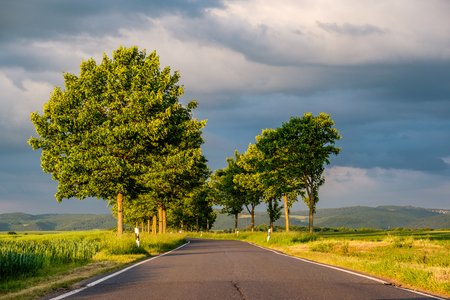 Rural road between fields in warm sunshine under dramatic sky, fresh vibrant colors, at Rhine Valley (Rhine Gorge) in Germany