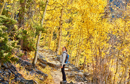 Woman tourist walking on trail in aspen grove at autumn in Rocky Mountain National Park. Colorado, USA. Stock Photo