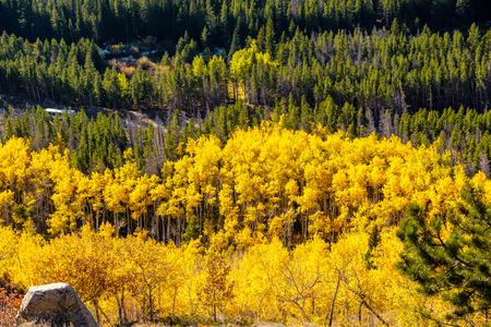 Aspen grove at autumn in Rocky Mountain National Park. Colorado, USA. 스톡 콘텐츠