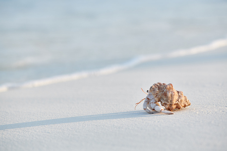 Hermit crab on a beach at Maldives