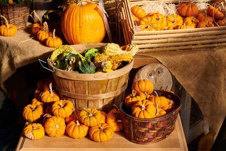 Pumpkin patch. Fresh pumpkins on a farm market still life, Connecticut, USA