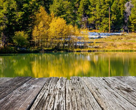 Autumn aspen trees in Colorado, USA. Imagens