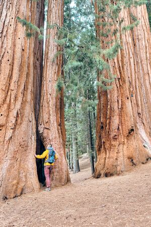 Tourist with backpack hiking in Sequoia National Park. California, United States. Imagens - 128906569