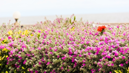 purple flower Stock Photo - 17134525