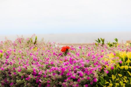 purple flower Stock Photo - 17134524