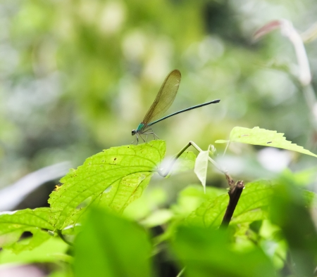 longlegs: DRAGONFLY ON THE TREE