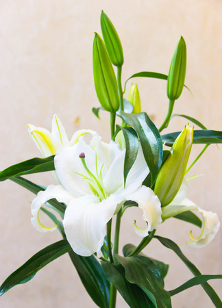 Beautiful lilies for an apology