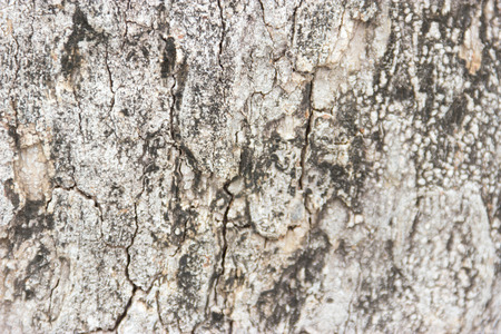 THE BLACK COLOR OF BARK Stock Photo