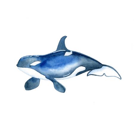 Killer whale watercolor raster. Animals underwater world raster. Foto de archivo - 103620412