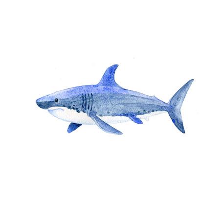 Shark watercolor raster. Animals underwater world raster.