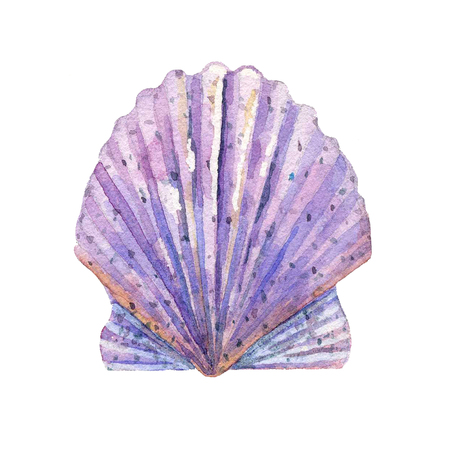 Shell watercolor raster. Stock Photo