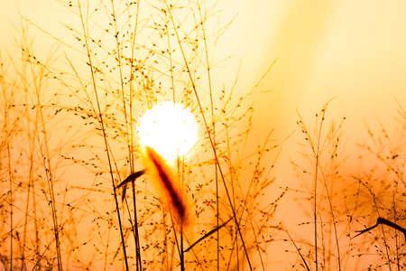 Brittle Grass
