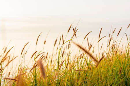 흐릿한 잔디밭