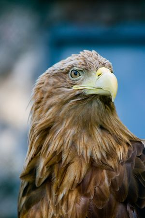 Sharp-sighted sight, sharp beak