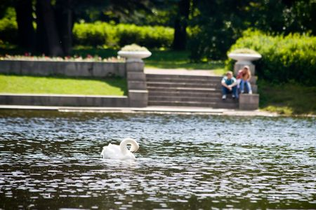 Enamoured pair talks on the bank of lake to a swan Stock Photo