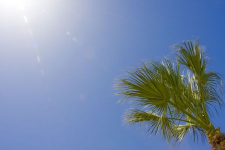 Palm branches against the blue sky