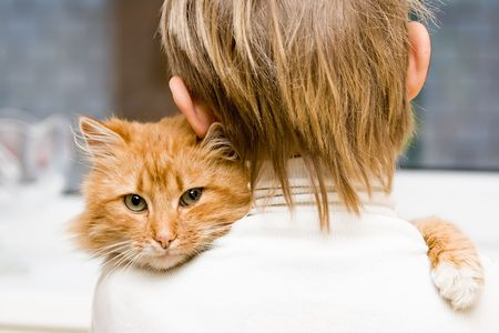 The red cat sitting on a shoulder at the child Stock Photo