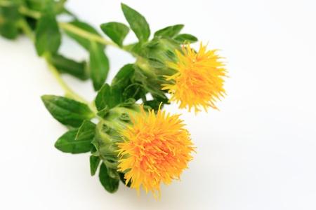 Safflower