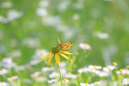 Butterfly on a yellow flower photo