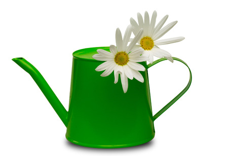 marguerites: Watering can with marguerites