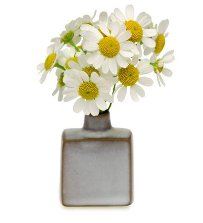german chamomile: Chamomile in a vase