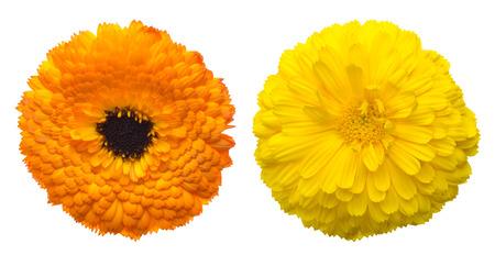 Flower head of pod marigold Zdjęcie Seryjne