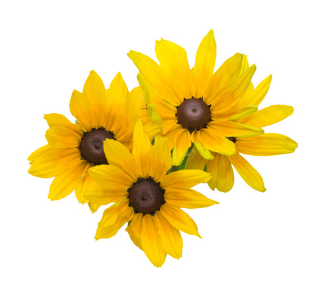 susan: Bouquet of black-eyed Susan