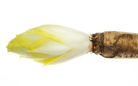 Chicory with a root 版權商用圖片 - 34048065