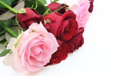 Rosen in einem weißen Hintergrund Standard-Bild - 34100087