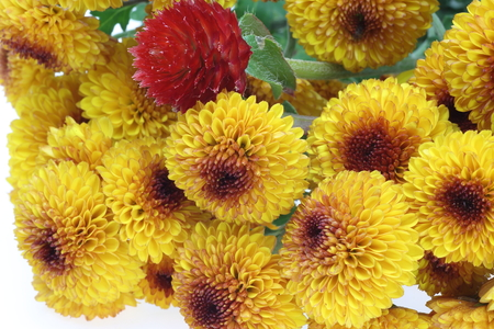bachelor s button: Bouquet of chrysanthemum and globe amaranth