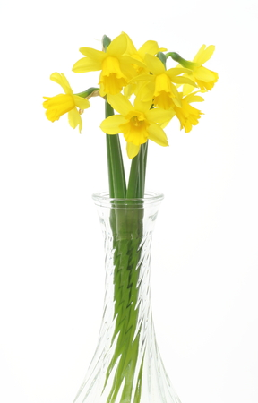 glass vase: Daffodils in a glass vase