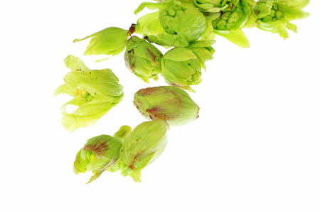 butterbur: Japanese butterbur sprout Stock Photo