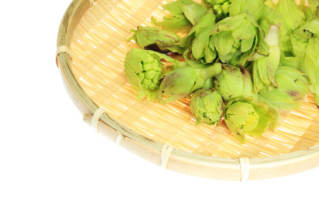 butterbur: Japanese butterbur sprout on a colander Stock Photo