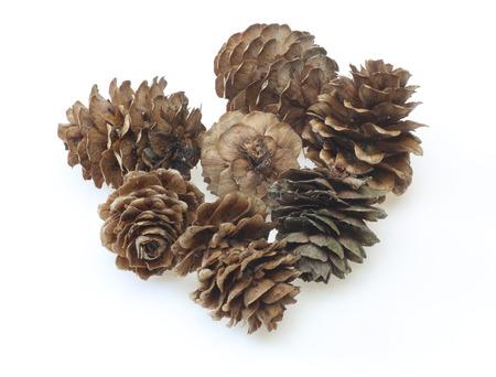 Pine cones of larches