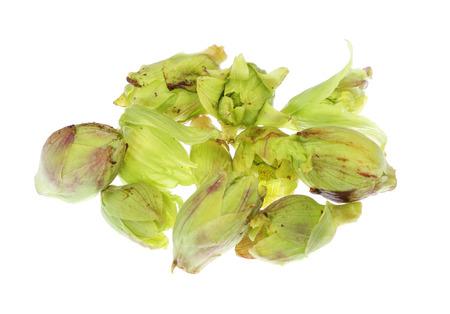 butterbur: Japanese butterbur sprout Stock Photo
