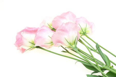 gentian flower: Bouquet of eustoma