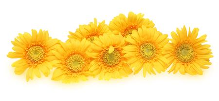 dais: Bouquet of Transvaal dais Stock Photo