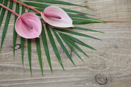 Anthurium on a leaf 版權商用圖片
