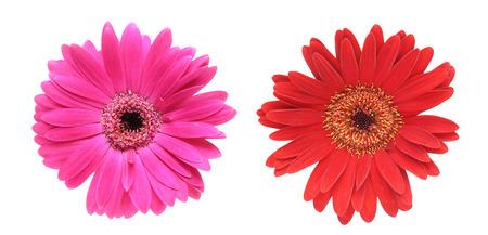 dais: Flower head of the transvaal dais
