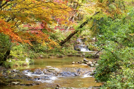 mountain stream: Mountain stream in autumn