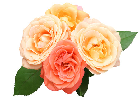 cut flowers: Bouquet of roses with leaves