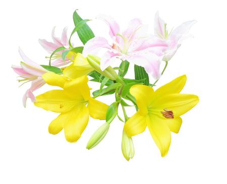 flower head: Flower head of lily