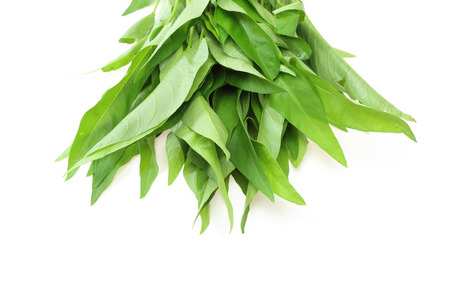 chinese spinach: Water spinach Stock Photo