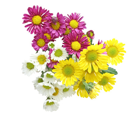 cut flowers: Bouquet of chrysanthemum Stock Photo