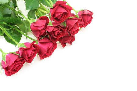rosas rojas: Ramo de rosas