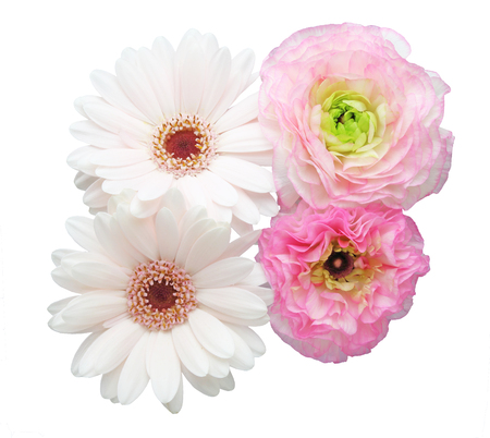 persian buttercup: Bouquet of Transvaal daisy and Persian buttercup