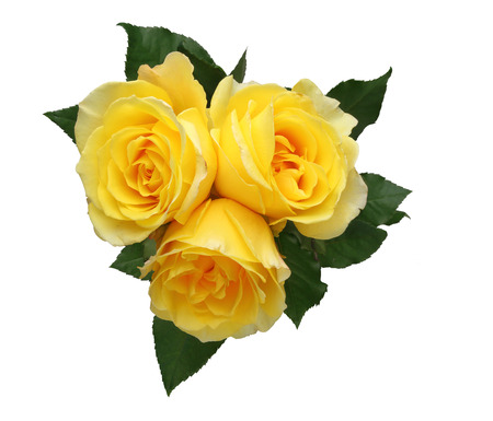 beautiful flower: Bouquet of roses with leaves